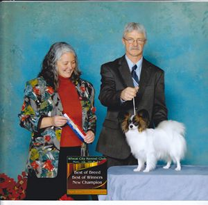 Papillon Breeder Maximillian